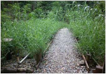 Biofiltros una Opción Amigable con el Medio Ambiente